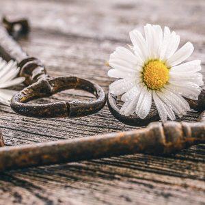 daisy-5043855_1280