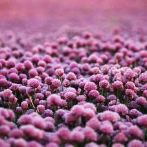 purple-5935577_1280